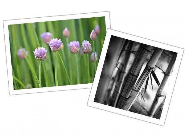 FineArt Druck auf Hahnemühle Photo Rag® Bright White 310 g/m² nach Maß, Preis nach m²
