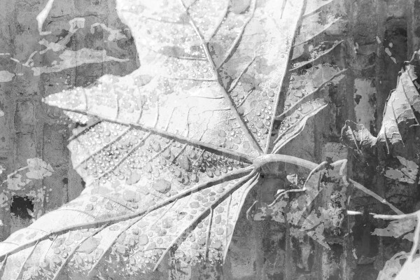 Design Akustikbild Leaf nach Maß
